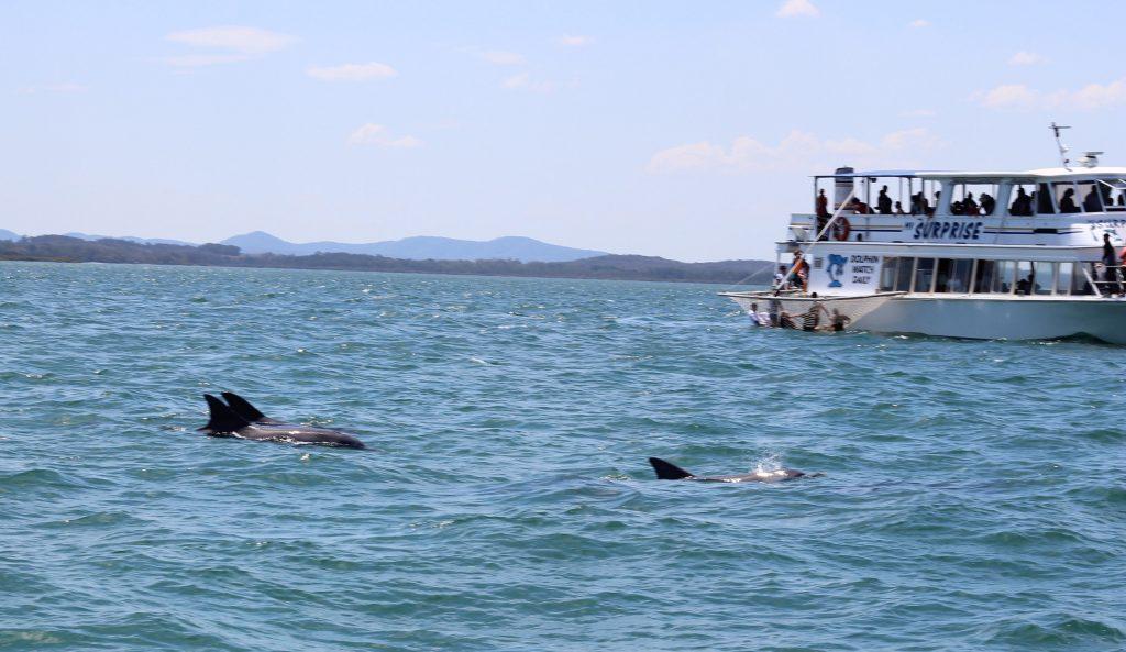 Shoal-Bay-NSW-Holiday-Boat-Charter-Dolphin-Spotting